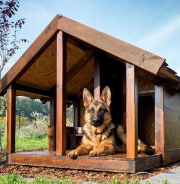 как приучить собаку к будке и цепи