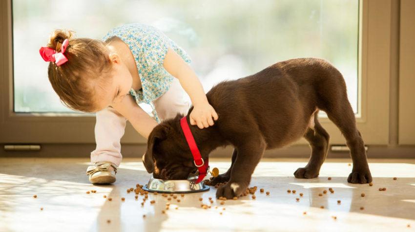 как приучить собаку к сухому корму