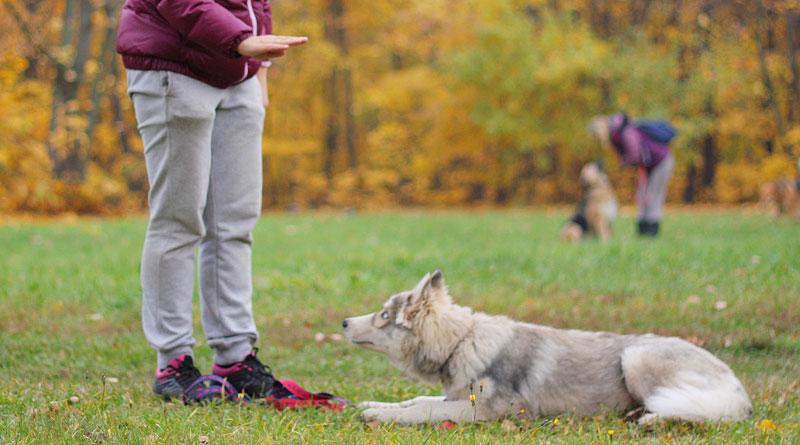 приучение собаки к команде