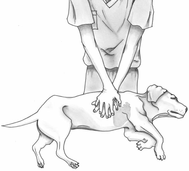 оказание неотложной помощи собаке при ударе током