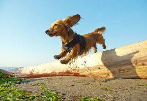 причины переломов таза у собак