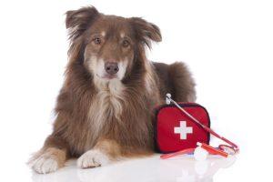 остановка кровотечения у собаки