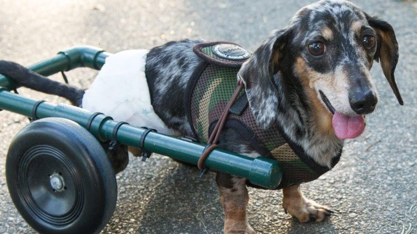 последствия удара током у собак
