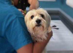симптомы и лечение перелома у собак