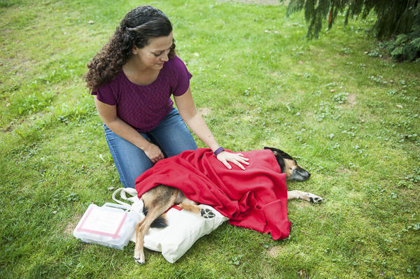 перелом таза у собак