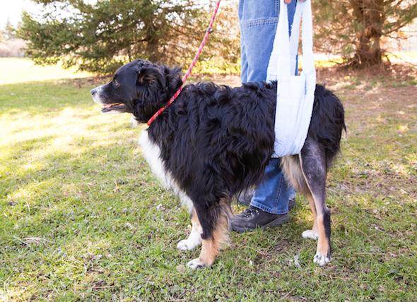 восстановление собаки после перелома