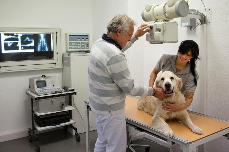 диагностика гайморита у собак