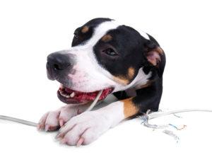 электротравма у собак
