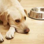 причины, почему собака не есть