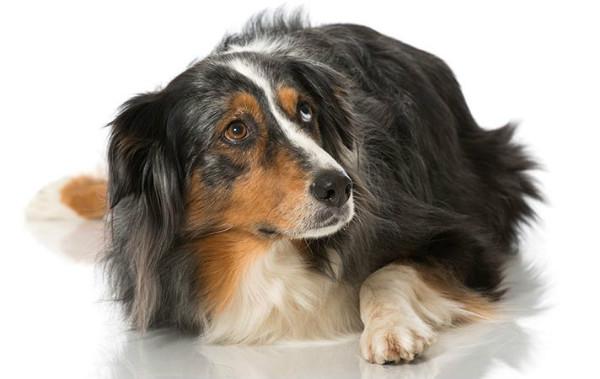 что делать собака боится людей
