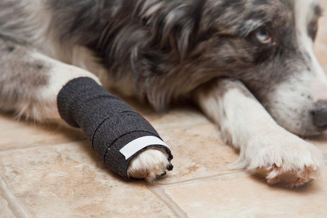 первая помощь при сломанном когте у собаки