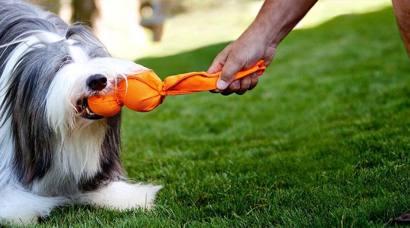 Собака боится гулять