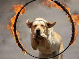 лечение ожогов у собак