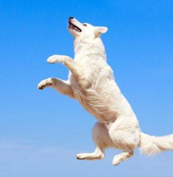собака падает