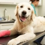 чем обработать рану у собаки