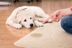 почему собака гадит