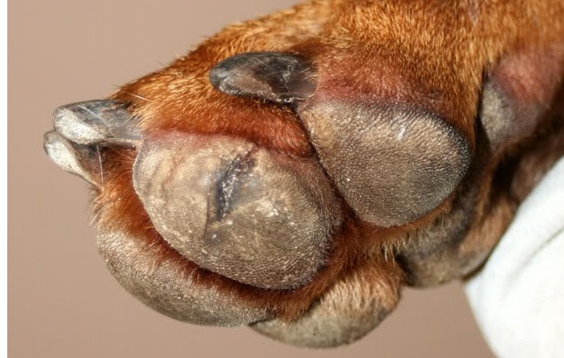 трещины на лапах у собак лечение