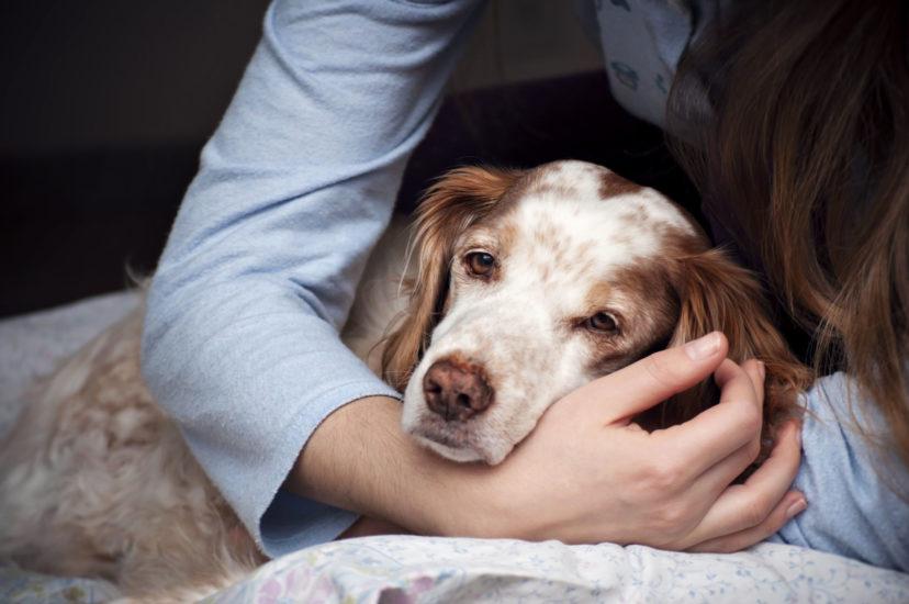 онкология у собак