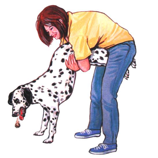 собака давится