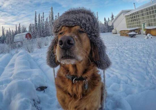 мокрый нос у собаки