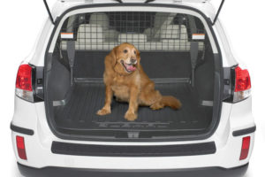 Как перевезти собаку в машине