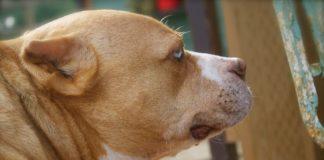 опухоль на шее у собак