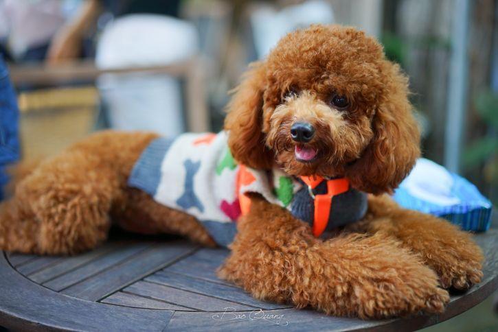 Сколько живут собаки в домашних условиях