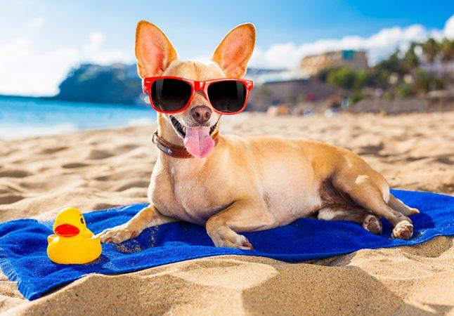 Как помочь собаке в жару