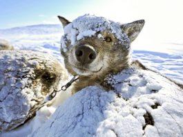 Собака замерзла