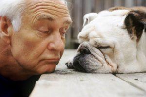 Уход за старой собакой