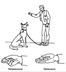 чем поощрять пса