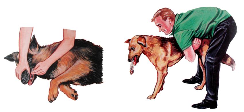 Собака задыхается