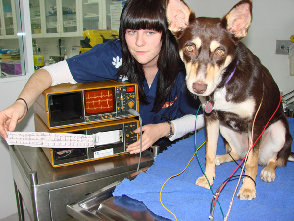 Томография собаке