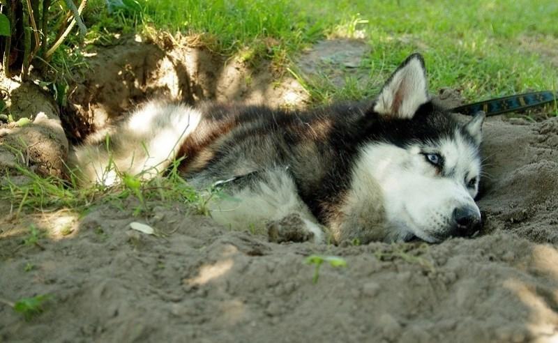 Почему собаки копают ямы