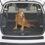 транспортировка собак