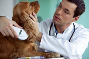 как проходит чипирование собак