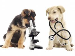 Биохимический анализ крови собаки