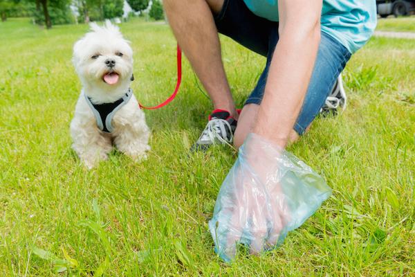 анализ кала у собаки