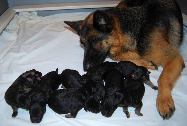 после родов