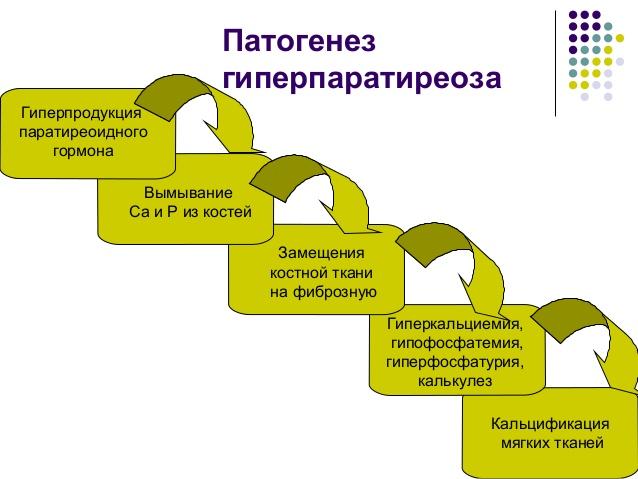 гиперпаратиреоз у животных