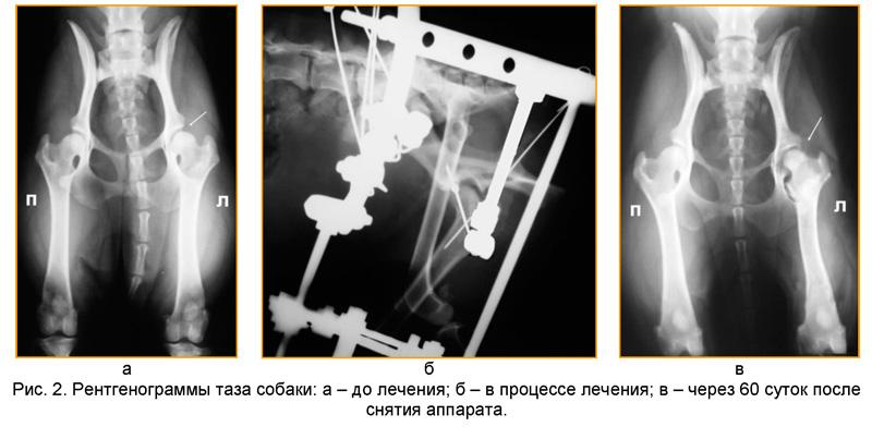 Как сделать рентген собаке