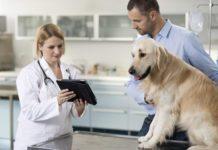 Дексаметазоновая проба у собак