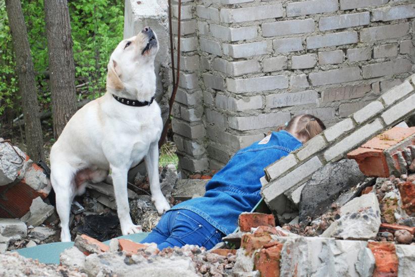 Как научить собаку искать