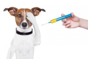 Анализы на гормоны у собак