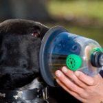 астма у собак