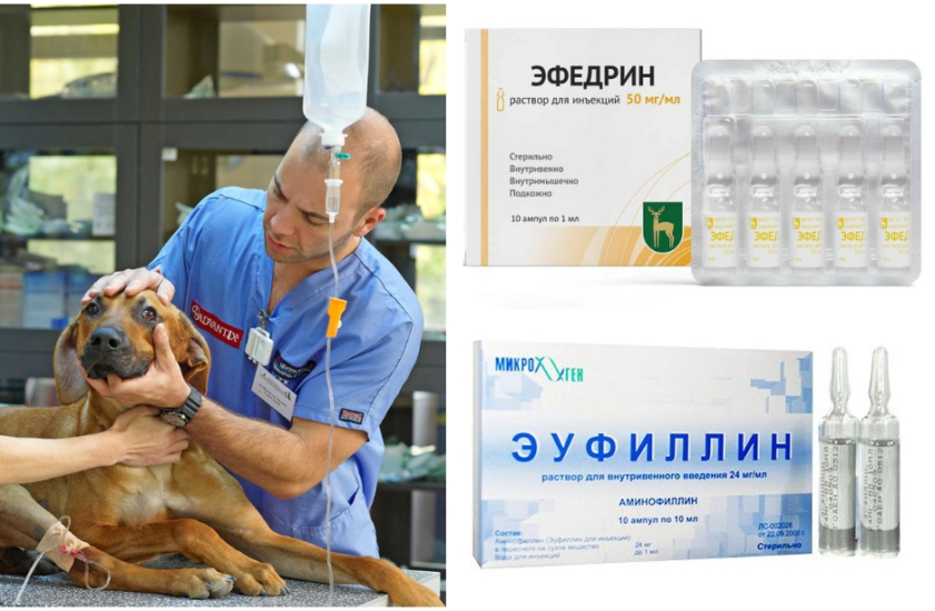 эмфизема легких у собак