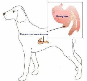 инсулинома у собак