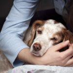 злокачественная опухоль у собаки