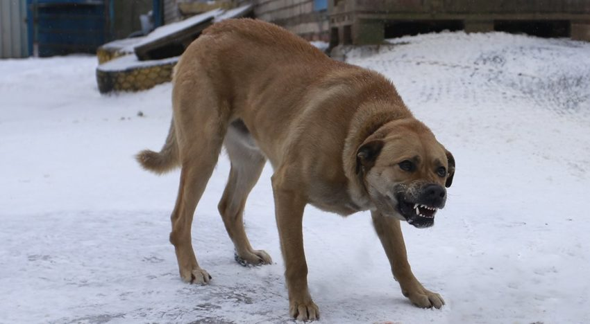 Собака после кастрации