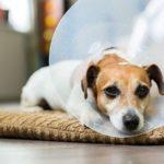 защитный воротник для пса